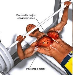 How-to-Bench-Press