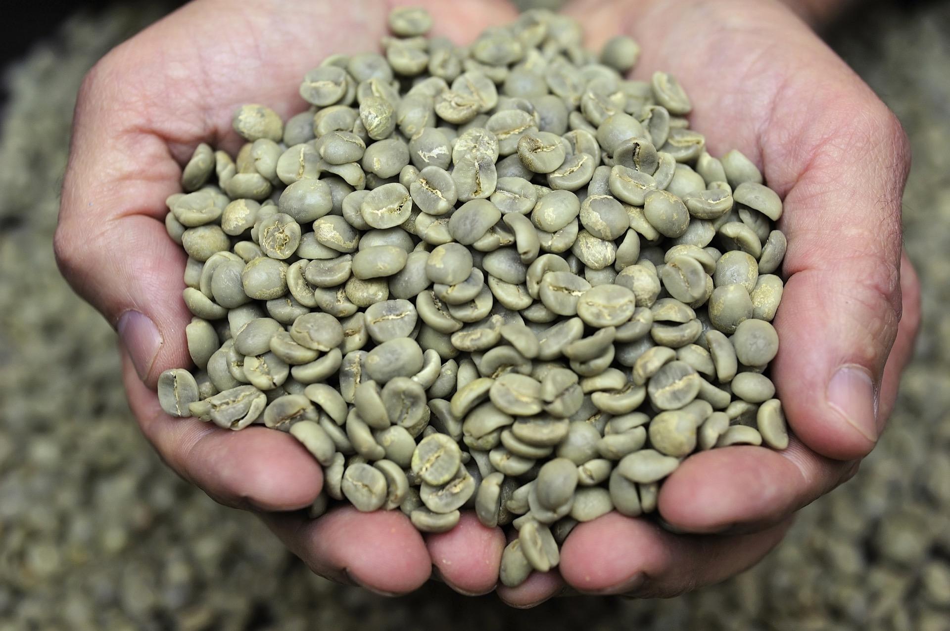 grønn kaffeekstrakt slankemiddel