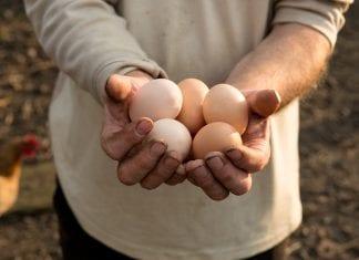 egg sunt kosthold